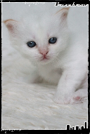 Les bébés de Foxy et Pepper Grace3-36321a5