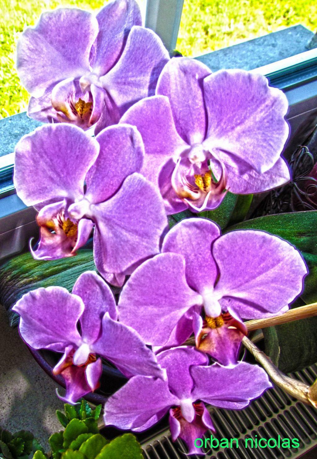 fleurs hdr Img_1939-344019c-3440226