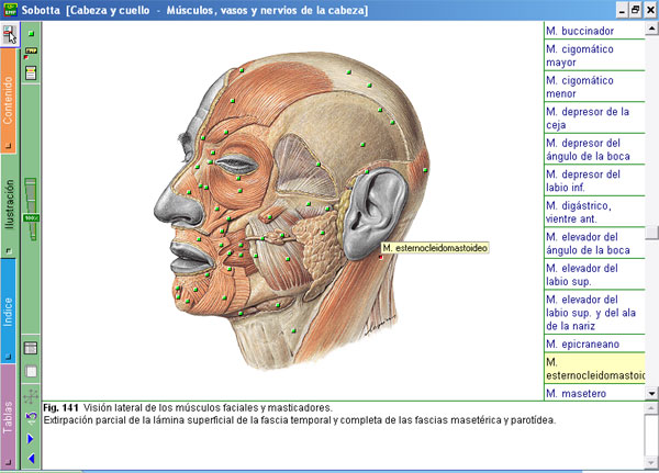 Sobotta - Anatomía Humana CD Español | booksmedicos